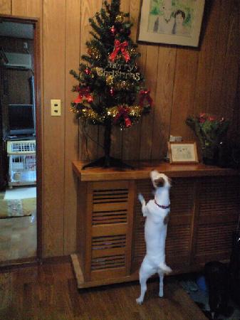 クリスマスツリー参上
