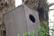 DSC01269奥の杉の木巣箱