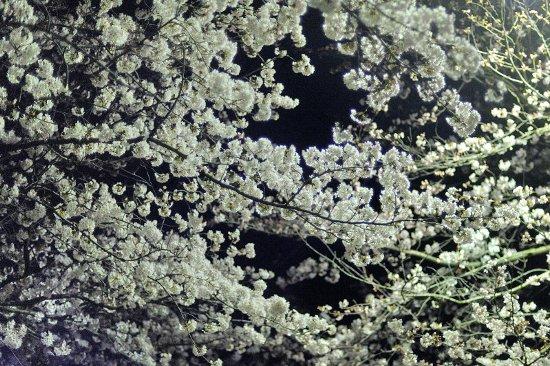 20090523_0006.jpg