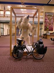 自転車完成!シロクマと