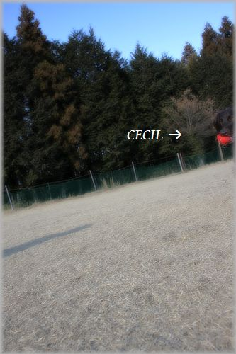 IMG_0350.jpg