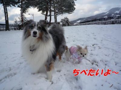 1.くりには辛い雪の上