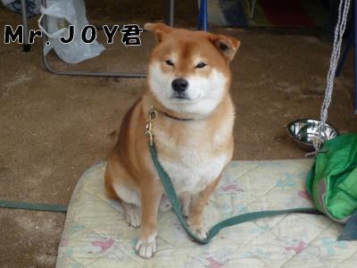 5.JOY君