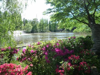 7 公園の池