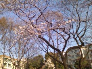 110401_桜