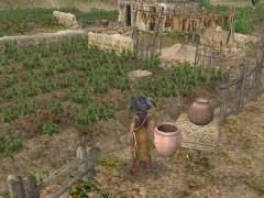 トゥンベスの畑