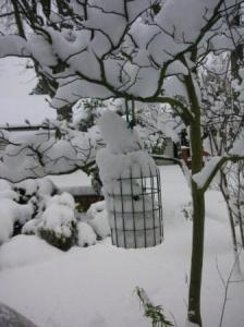 餌が雪まみれ