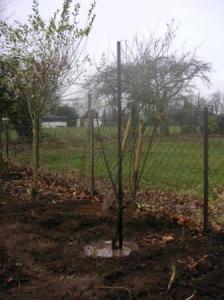 りんごを植えた
