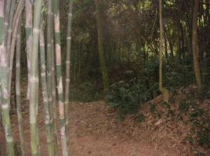 竹交じりのジャングル