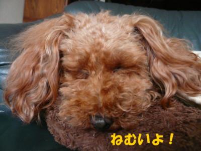 眠いウール