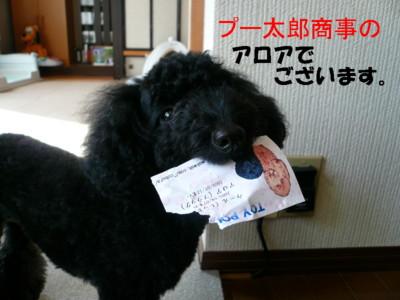 ぷー太郎商事のアロアです。