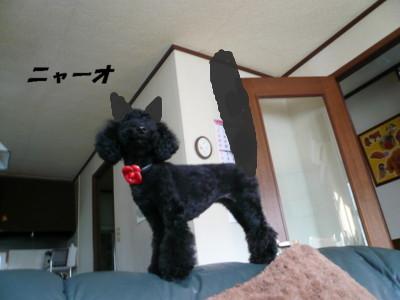 ネコのアロア1