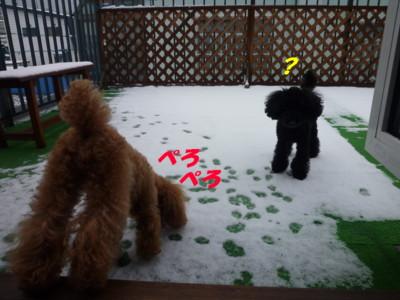 雪おいしいよ~