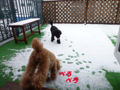 雪おいしーよ