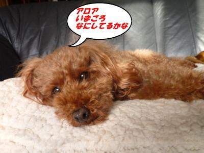 この犬ウータン