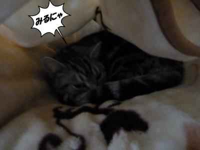 猫のピータン
