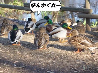 近くの公園2