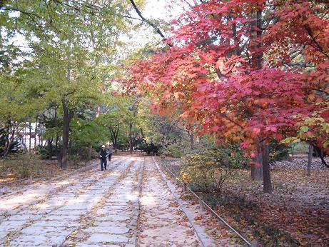 *秋ですね~*