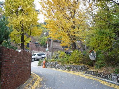 *この坂道も秋がいっぱい~*
