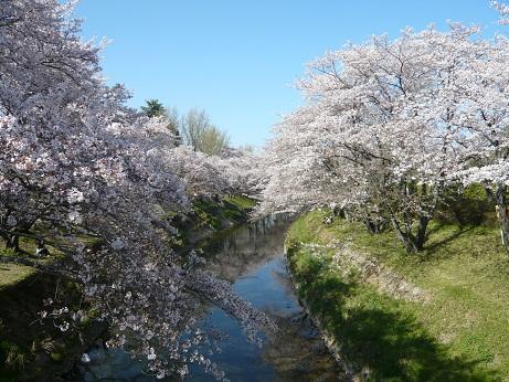 *桜色に染まって*