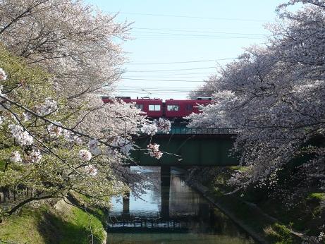 *電車が桜の中を通過~*