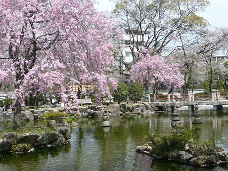*濃い桜色が素敵*