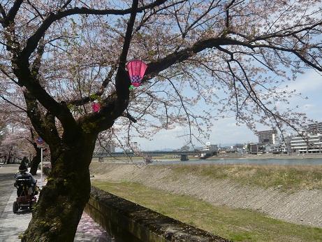 *川沿い風景~*