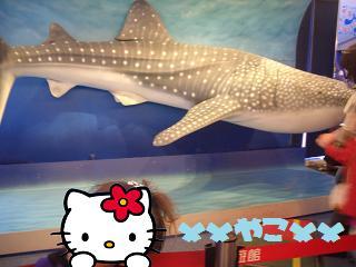 ジンベイザメの模型と姫2