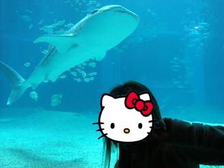 ジンベイザメとやこ