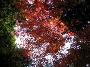08.11.29  宮島・大江の貝殻塚探訪 036