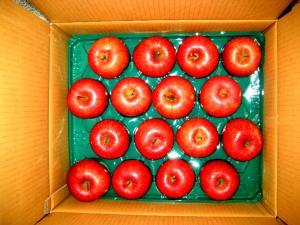 2009.1.22 津軽リンゴ 001