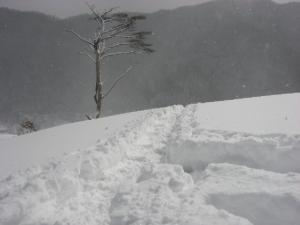 2009.1.24  深入山 013