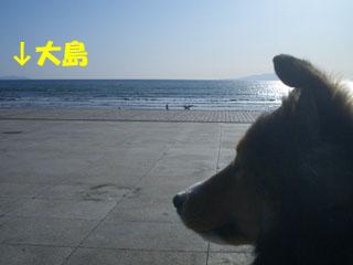 大島へは、また江ノ島からいけるざますか?