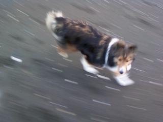 走るから、早く投げるざます。