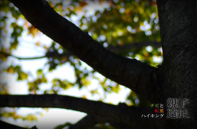 DSC_8306b.jpg