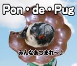 Pon・de・Pug みんなあつまれ~♪