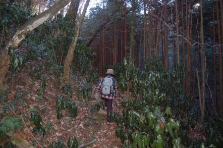 12鷹取山への山道