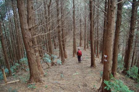 大沢三角点への山道