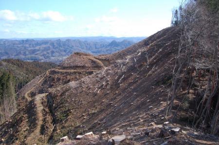 14伐採地