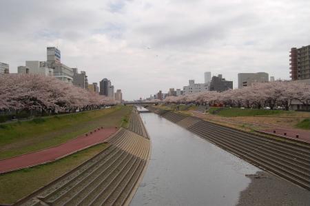 桜川土手1