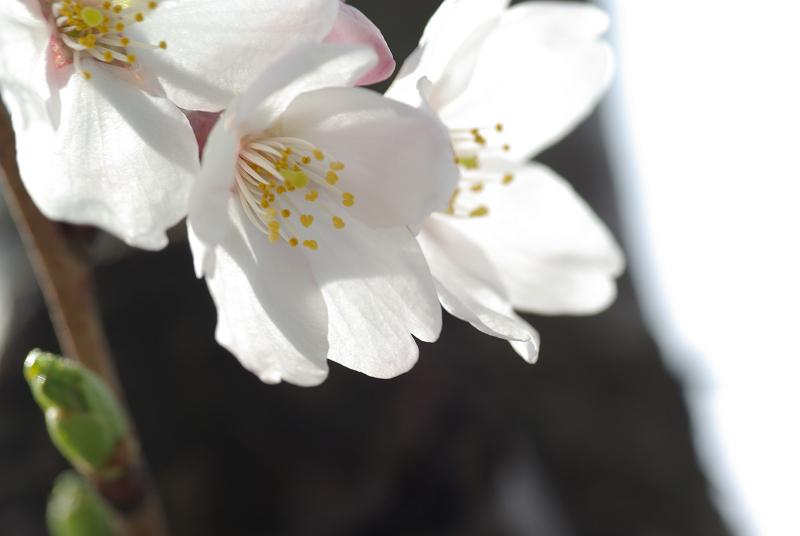 s120 mm-2009-04-04_15_16_50
