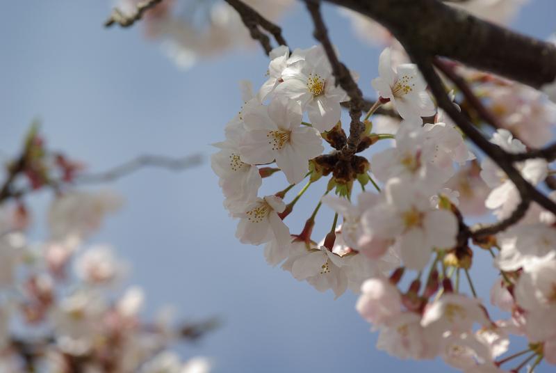 s120 mm-2009-04-04_15_15_16