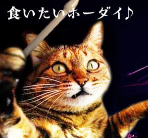 猫本姉妹10