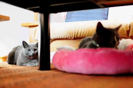 苺ベッド2