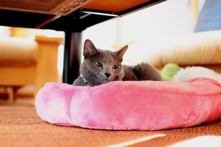 苺ベッド1