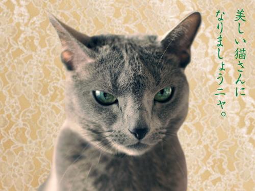再春館猫3