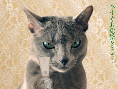 再春館猫7
