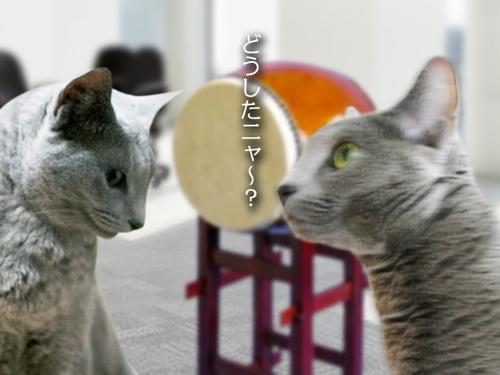 再春館猫太鼓篇CM4