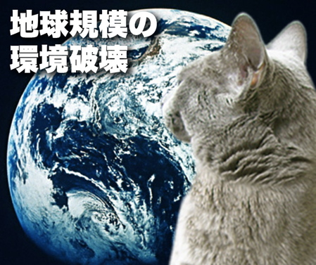 ハイブリッド猫2