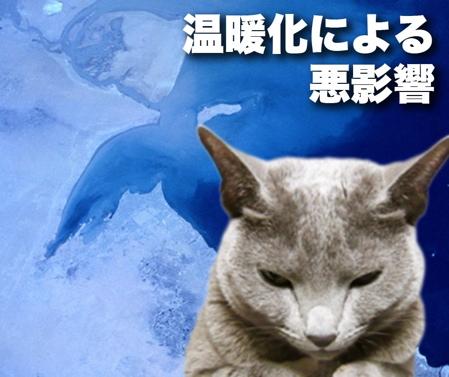 ハイブリッド猫3